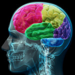 Nuevo Descubrimiento Sobre Cómo El Cerebro Reconoce El Miedo