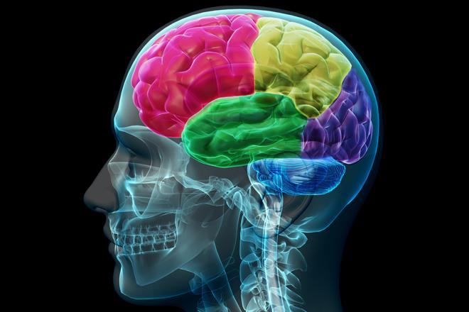 Nuevo Descubrimiento Sobre Cómo El Cerebro Procesa El Miedo