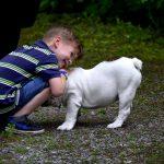 Tener un perro como mascota mejora el estrés en los niños